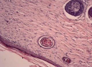 Projeto Lâminas histológicas para o ensino de ciências e biologia na educação básica